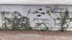 Graffiti in Italy. July/August 2016.