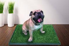 Desde $399 por contenedor sanitario para mascotas marca GreenCarPet® con envío. Elige tamaño