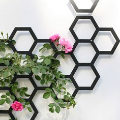 You know those funky little v-vase shaped wooden trellis' that come shoved in grow pots with climbers? They do the job long enough to get the plant out of the nursery -- but you know what I am tal...