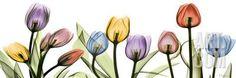 Colorful Tulip Scape Art Print by Albert Koetsier at Art.com