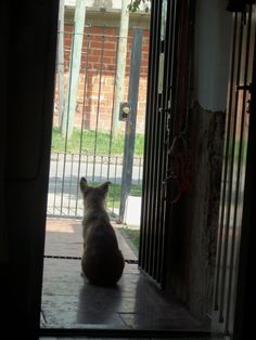 yo te esperare ♫