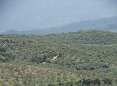 Σπάρτη (Λακωνία) Mountains, Nature, Travel, Naturaleza, Viajes, Destinations, Traveling, Trips, Nature Illustration