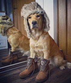 my funny dog. Funny Dogs, Boots, Winter, Silly Dogs, Crotch Boots, Winter Time, Heeled Boots, Shoe Boot, Cute Dogs