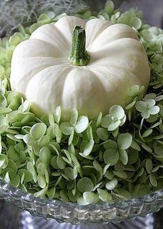 Kürbisse / Cucurbita + Gemüse / Vegetables