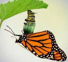 """""""What the caterpillar calls the end, the rest of the world calls a butterfly."""" —Lao Tzu"""