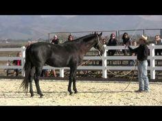 Horsemanship demonstration at Gilroy Gaits Dec 2011 Part 1