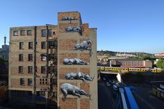 Roa, Johannesburg, South Africa