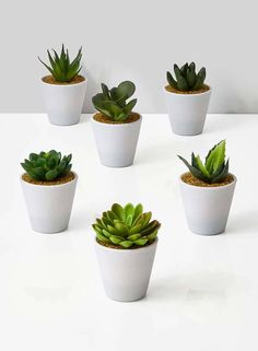 Artificial Plants fake succulent plants in white pot store retail display Bridesmaid Small Fake Plants, Fake Succulent Plants, Fake Plants Decor, Faux Succulents, Planting Succulents, Succulent Display, Succulent Care, Artificial Plant Wall, Artificial Succulents