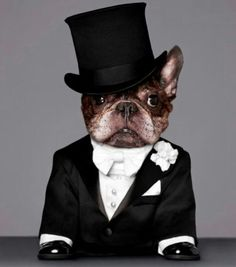 vamos de boda, 'Puttin' on the Ritz', French Bulldog in a Tuxedo, Tophat, and Tails❤