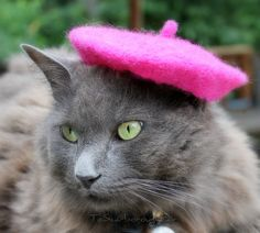 French Cat Beret Raspberry Beret by ToScarboroughFair on Etsy .... There is a person on Etsy who actually sells tiny hats.. for cats...