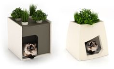 Pet beds with integrated planters for cat grass or other pet-safe plants, by Pousse Creative