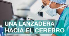 Una lanzadera hacia el cerebro. #Salud #Cazafarma http://blog.cazafarma.com/una-lanzadera-hacia-el-cerebro/