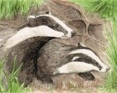 Because badgers are brilliant