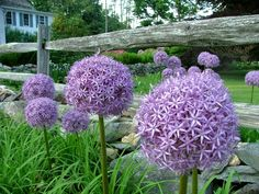 24 Best Big Blooms Images In 2019 Most Popular Flowers