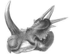 """Résultat de recherche d'images pour """"Ceratopsia"""""""