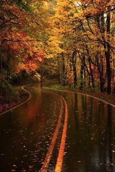 61 Ideas For Autumn Tree Photography Pathways Tree Photography, Tumblr Photography, Landscape Photography, Autumn Scenery, Autumn Nature, Autumn Rain, Art Nature, Autumn Leaves, Landscape Wallpaper