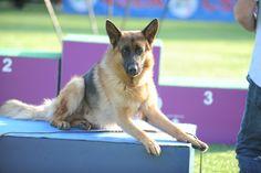 cancorso,cane, cani, concorso, concorsi, il messaggero, quotidiano, animali, contest, evento finale