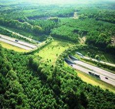 A wildlife bridge to help animals cross the highway.