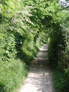 green-tunnel-crunching-flints-rifle-butts-alley-epsom-surrey-england-roadsofstone.jpg 375×500 pixels