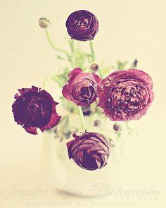 Purple Ranunculus / flower photography