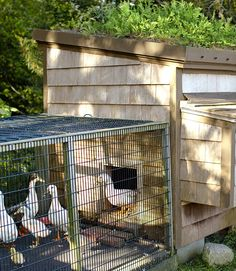 """Planted with native ferns, the top of this duck house functions as climate control. Conway transformed the roost's slanted roof (essential for runoff) into a raised bed by adding a two-by-four-inch lip, drilling holes through the lip's lower front edge, and fitting the holes with copper tubes. A pond liner waterproofs the whole thing. """"I planted the roof once several years ago and have barely touched things since,"""" he admits. """"It's been carefree, with the exception of an occasional watering."""