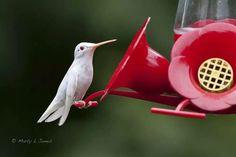 Beautiful picture of a hummingbird!!! I love life.