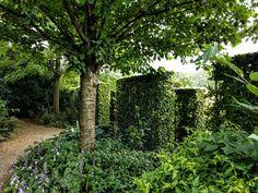 Slabs of hedges