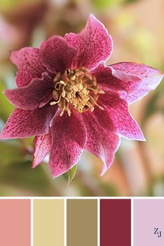 ZJ Colour Palette 466 #colourpalette #colourinspiration
