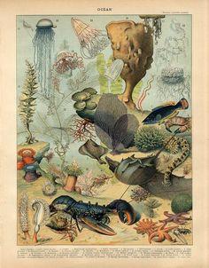 1897 Ocean Fish Jellyfish Lobster Crab Starfish Antiq Lithograph Print Larousse | eBay