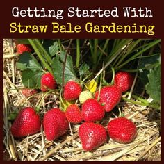 Learn how to get started gardening using straw bales.Straw bale gardening is ideal when space is tight plus it is economical when compared to raised beds.