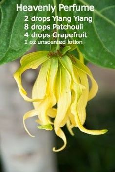 Essential oil perfumed lotion  recipe. Ylang Ylang, Patchouli and Grapefruit, add to an unscented lotion. www.hayleyhobson.com