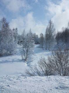 Winter morning in Sonkajärvi
