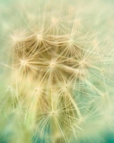 Pastel Dandelion Photograph - Stargazing - Flower, Nature Photography, Garden, Spring Pastel, Yellow and Mint Green. $30.00, via Etsy.