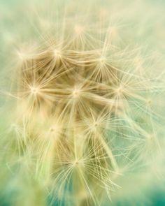Stargazing - Fine art photograph - Dreamy dandelion in soft pastels by Irene Suchocki $30.00