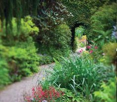 the herbacious border at Mount Usher