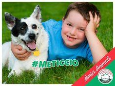 UN cane #meticcio è un allegro compagno di giochi, a volte buffo e con tanta capacità di dare affetto, anche ai più piccoli.