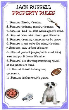 Jack Russell Property Rules Magnet VERY FUNNY by tedwards52, $4.79