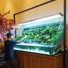 "Fish in Aquascaoe on Instagram: ""100% hunting from forest... by @jeffry_bucex_christian #aquascaper #scaping #aqua #aquas #aquarium #aquarium4life #fish #fishtank…"" Turtle Aquarium, Saltwater Aquarium, Aquarium Fish Tank, Planted Aquarium, Freshwater Aquarium, Saltwater Tank, Fish Tanks, Aquarium Landscape, Nature Aquarium"