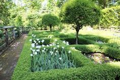Spring bulbs in parterre