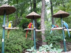 Parrot Mountain - Enjoy a beautiful landscaped waterfall and garden setting as you experience the sights and sounds of tropical birds from around the world.