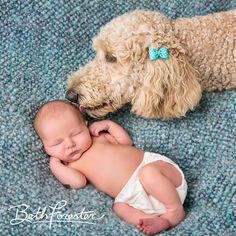 Puppy Love Newborn photo with dog kissing sibling by Beth Forester