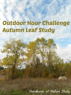 Handbook of Nature Study: Outdoor Hour Challenge Beginning a Tree Focus Tree Study, Tree Identification, Nature Study, Science Activities, Autumn Leaves, Challenges, Weather, Homeschooling, Outdoor