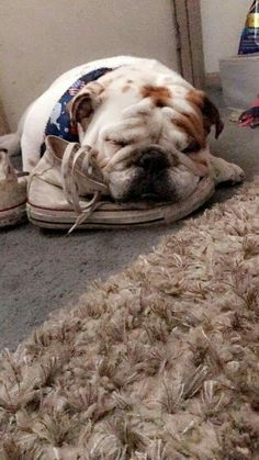 asleep on my shoe