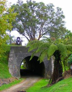Okaihau old railway tunnel New Zealand Garden Bridge, New Zealand, Trains, Outdoor Structures, Sweet, Plants, Beautiful, Candy, Planters
