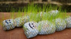 """Grow a hairy grass caterpillar - by Frog Goose and Bear on Village Voices ("""",)"""