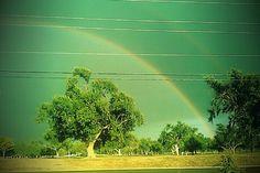 taste the rainboww. rain in west texas is a beauty!