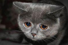 sad cat wants your love...