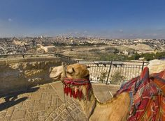 Camel in the Old City.a pretty common sight Old City, Jerusalem, Acceptance, Camel, Old Things, Places, Pretty, Pictures, Animals