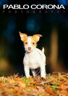 Puppy Love #seven @Pablo Corona Photography