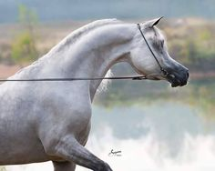 If God had made anything more beautiful and wondrous as a horse, he would've saved them for himself.